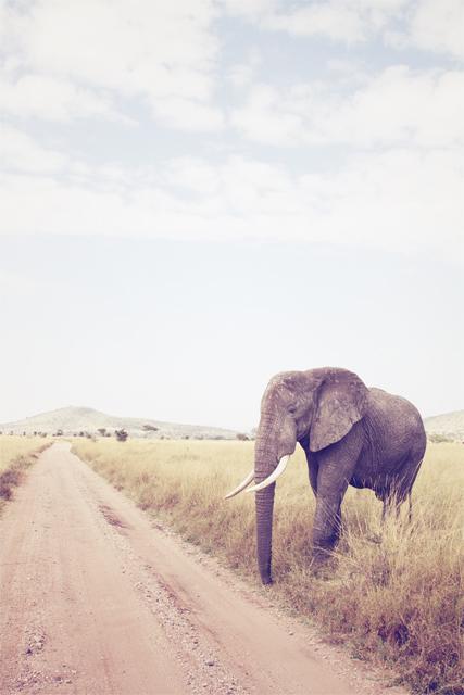 http://www.jjnorris.com/files/gimgs/65_elephant.jpg